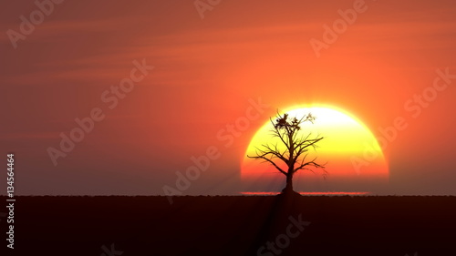 Poster Corail Growing tree at sunrise 3d illustration