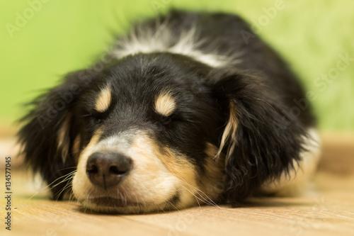 Foto  Welpe, der auf dem Boden mit seinen geschlossenen Augen schläft