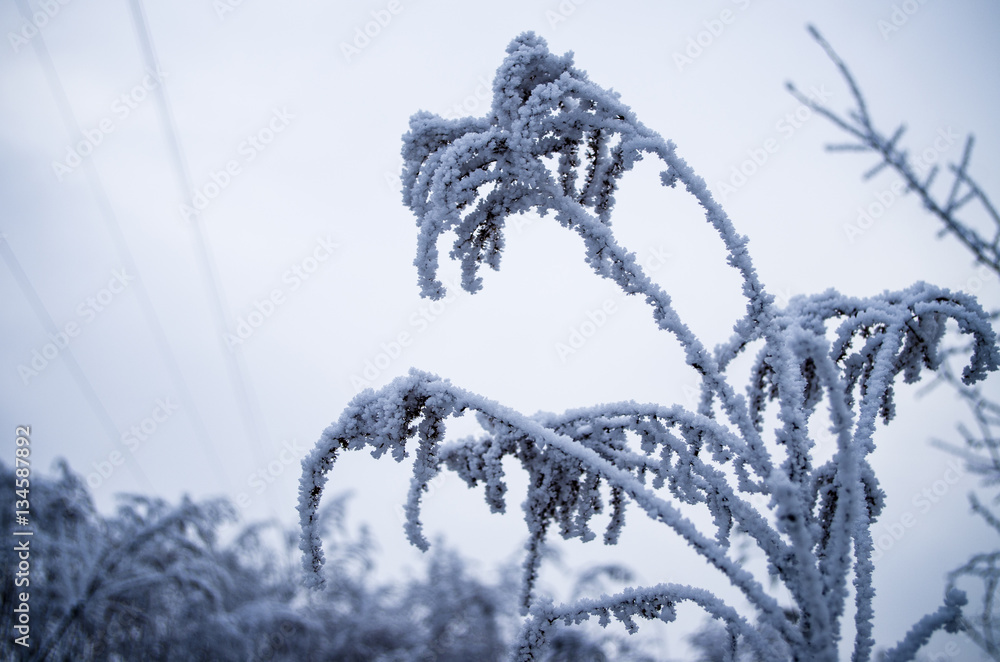 Fototapeta Atak zimy