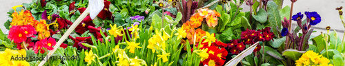 Gartencenter Frühling Panorama
