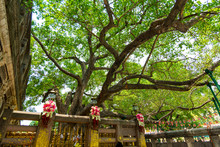 Bodh Gaya Is The Place Where ...