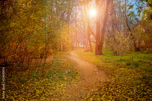 Foto op Canvas Weg in bos Colorful foliage in the autumn park. Golden leaves on branch, autumn wood with sun rays, beautiful landscape. Autumn. Fall. Autumnal Park. Autumn Trees and Leaves.
