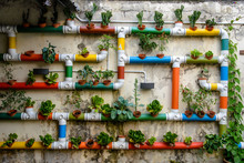 Urban Gardening - Colorful Pipes Filled With Vegetables