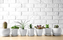 Pots With Succulents On Table Against Brick Wall Background