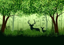 Green Forest With Wild Elk In ...