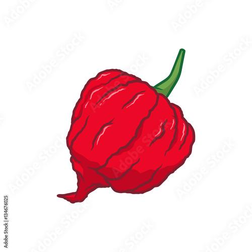 Photo  Carolina Reaper Chilli Pepper Vector Illustration