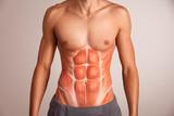 Human abdominal muscle.