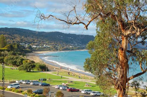Photo Gum tree and beach in Lorne, Victoria, Australia