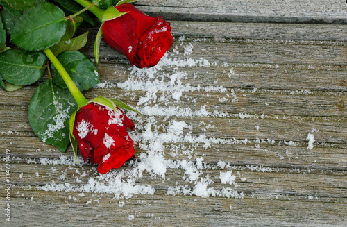 Fototapeta red roses and snow on wooden background for wallpaper. Red rose and snow with space for text on the wooden floor. obraz na płótnie