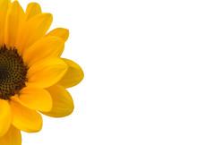 Half Sunflower On White Backgr...