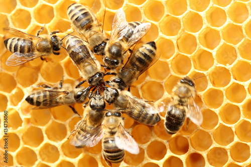 Foto op Canvas Bee Bienenkreis