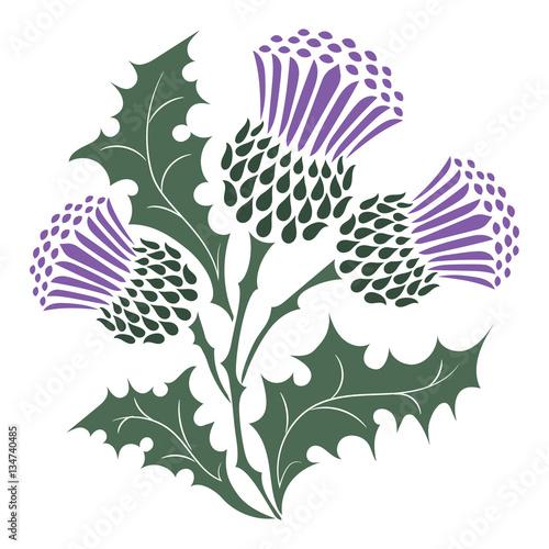 Obraz na plátně Thistle. Onopordum acanthium. Scottish Thistle