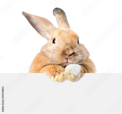 Fotografie, Obraz  Rabbit looking over a signboard. Isolated on white background