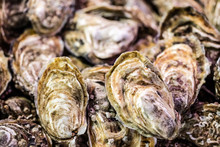 Fresh Oysters In Bulk At The Fish Shop For Holidays
