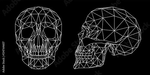 Fotografie, Obraz  Teschio umano vista frontale e laterale, illustrazione geometrica di linee bianc