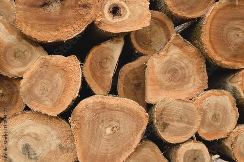 Fotografie, Obraz  Black Ash Log Pile