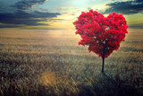 Fototapeta Natura - Red heart-shaped tree in the field against the background of a decline.