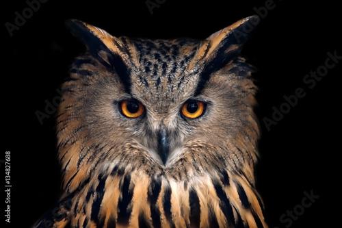 Fotobehang Uil Portrait of eagle owl on black background