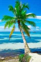 Fototapeta Popularne sea sky sun tree