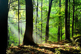 Forest in the Polish Monutains, light after storm. Fot. Konrad Filip Komarnicki / EAST NEWS Krynica - Zdroj 17.07.2015 Promienie swiatla w krynickim lesie.