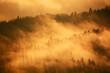 Morning fog in Polish mountains. Fot. Konrad Filip Komarnicki / EAST NEWS Krynica - Zdroj 12.11.2015 Wschod slonca na Jaworzynie Krynickiej. Las skapany w porannej mgle.