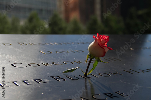 Fotografie, Obraz  rose in the dark shade and blurred background at the 911 memorial world trade ce