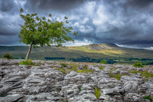 Whernside From Southerscales Is A Mountain In The Yorkshire Dales In Northern England. It Is The Highest Of The Yorkshire Three Peaks