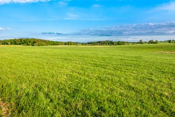 Green field of grass in spring, landscape