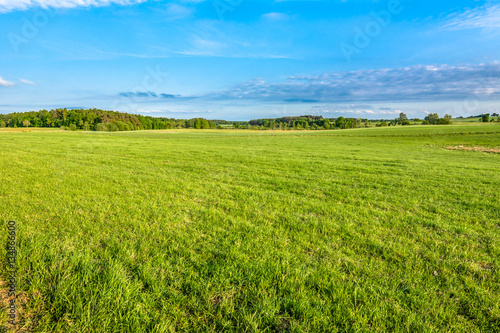 Green field of grass in spring, landscape