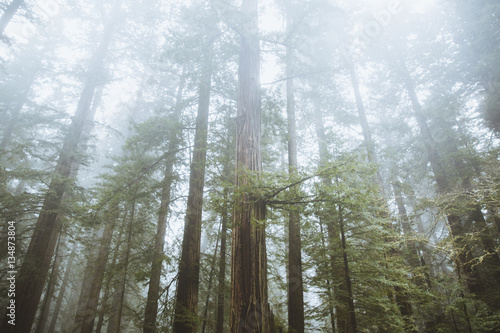 Low angle view of forest trees during fog