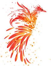 Fiery Mythical Bird