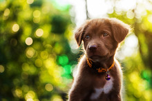 Blurred Abstract Photo Of Cute Brown Dog Look Up At Sunset. Wish, Hope, Goal, Or Dream For Business Concept Background Or Text Added