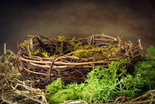 Empty Nest With Moss