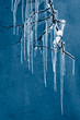 Icicles on a dark background. Frozen water.
