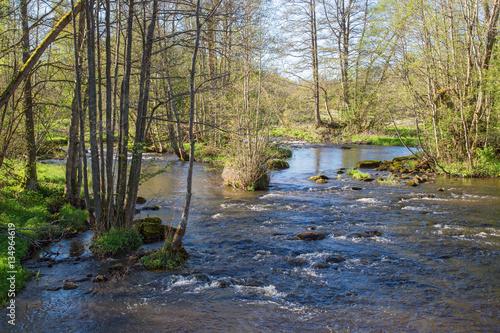Fotografía  River which runs through the greenery spring landscape