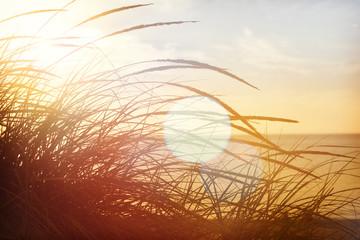 Panel Szklany Vintage beach grasses on the seashore, shot into the sun