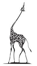 Graceful Giraffe Reaching For Food