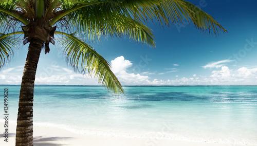 Fotobehang - palm and sea