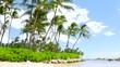 Tropical island. Palm trees on the sandy beach