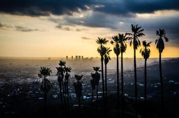 Palmy Silhouetted przeciwko Hollywood
