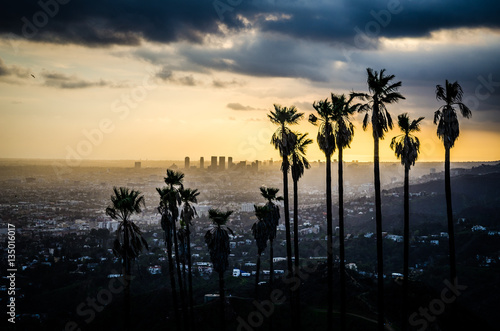 Fotografie, Obraz  Palms Silhouetted against Hollywood