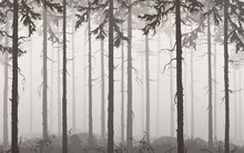 Background Seamless Horizontal Pine Wood, Brown Tones, Vector Illustration. It Can Be Used As Wallpaper In The Interior
