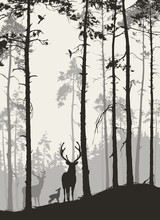 Silhouette Of A Pine Forest Wi...