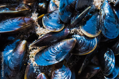 Mussel on a sandy beach. Background. Close-up.
