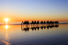 A Line Of Camels Walk Along Cable Beach In Broome, Western Australia, During Sunset. Western Australia