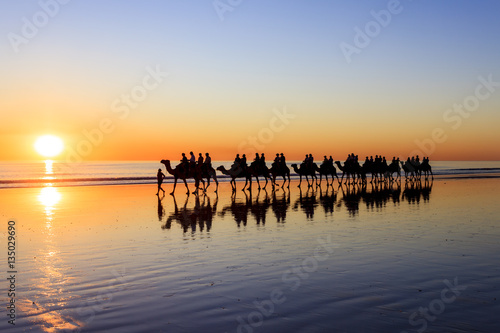 Staande foto Kameel A line of Camels walk along Cable Beach in Broome, Western Australia, during sunset. Western Australia