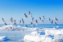 Flock Of White Gulls Flying Ov...