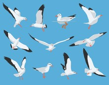 Set Of Flying And Swimming Sea Bird And Seagull Vector Illustration