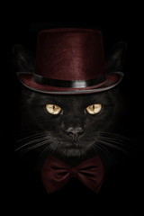 Fototapetadark muzzle cat in red hat and tie butterfly