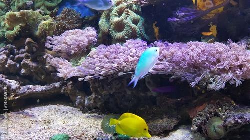 Poster Coral reefs Fische